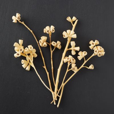 Preserved Conical Gum Branch Bunch