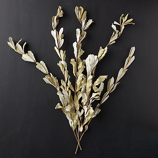 View larger image of Dried Integrefolia Bunch