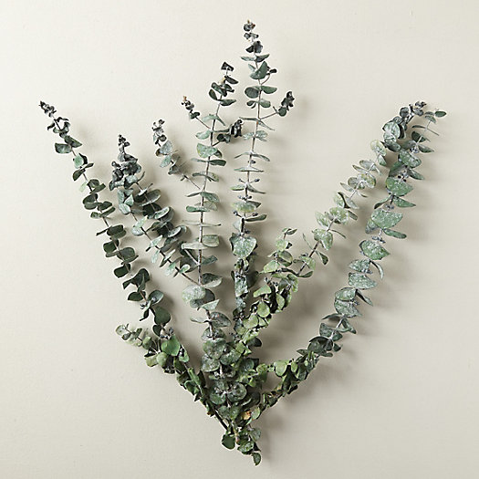 View larger image of Preserved Spiral Eucalyptus Bunch