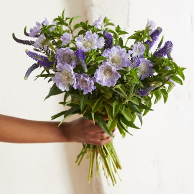 Summer Scabiosa, Veronica + Mint Bouquet