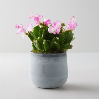 Pink Summer Cactus, Metal Pot