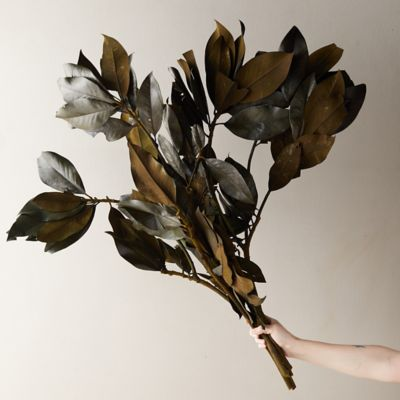 Preserved Magnolia Leaf Bunch