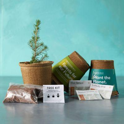 Tree Growing Seed Kits, Set of 3