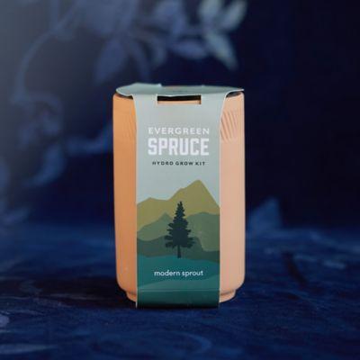 Evergreen Spruce Hydro Grow Kit