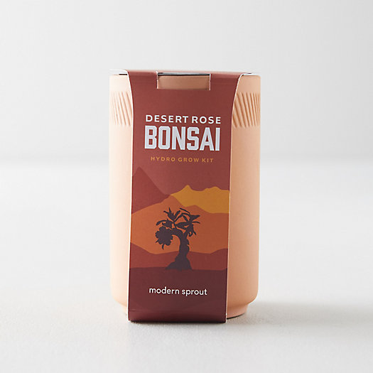 View larger image of Bonsai Grow Kit