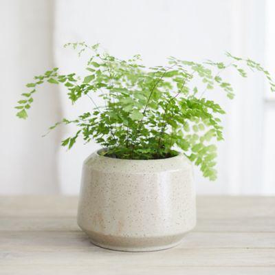 Speckled Ceramic Jar Planter