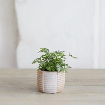 Colorblock Lines Ceramic Pot, Small