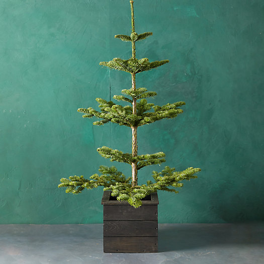 View larger image of Fresh Tabletop Natural Noble Fir
