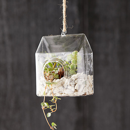 View larger image of Hanging Greenhouse Terrarium