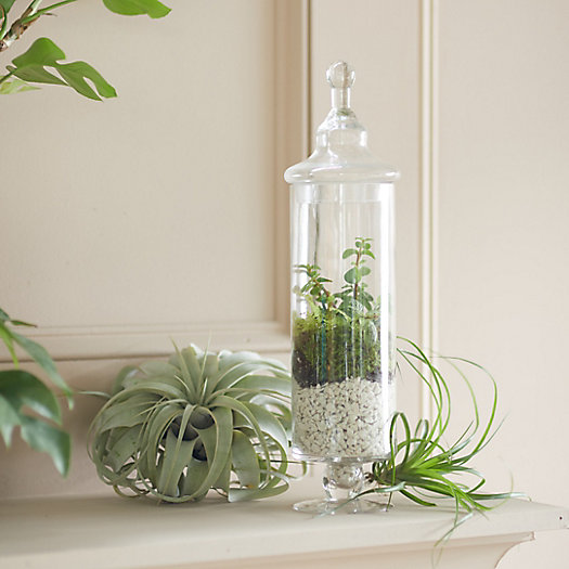 View larger image of Apothecary Terrarium