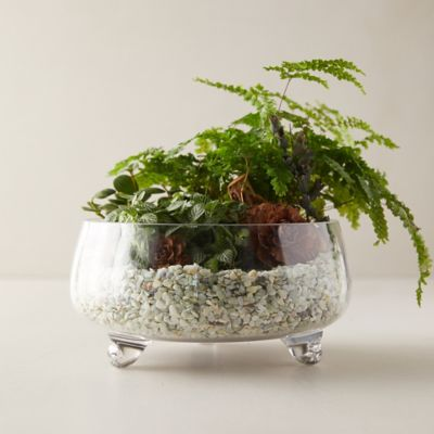 Low Footed Bowl Terrarium