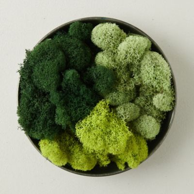 Preserved Green Reindeer Moss, Set of 3