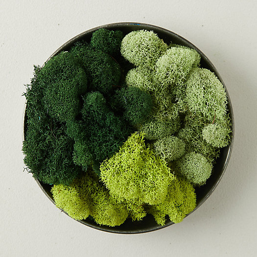 View larger image of Preserved Green Reindeer Moss, Set of 3