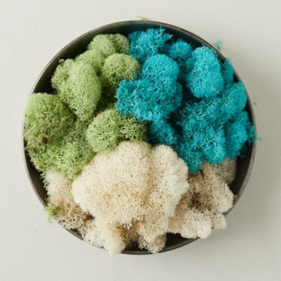 Preserved Blue Reindeer Moss, Set of 3