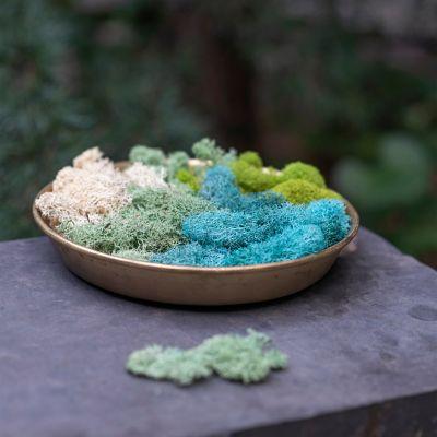 Preserved Blue Reindeer Moss, Set of 3