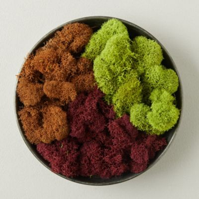 Preserved Red Reindeer Moss, Set of 3