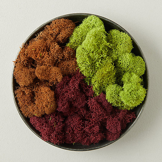 View larger image of Preserved Red Reindeer Moss, Set of 3