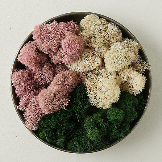 View larger image of Preserved Pink Reindeer Moss, Set of 3