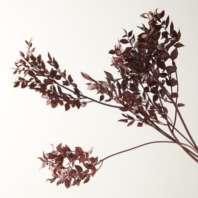 Preserved Ruscus Bunch, Burgundy