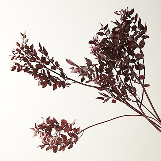 View larger image of Preserved Ruscus Bunch, Burgundy