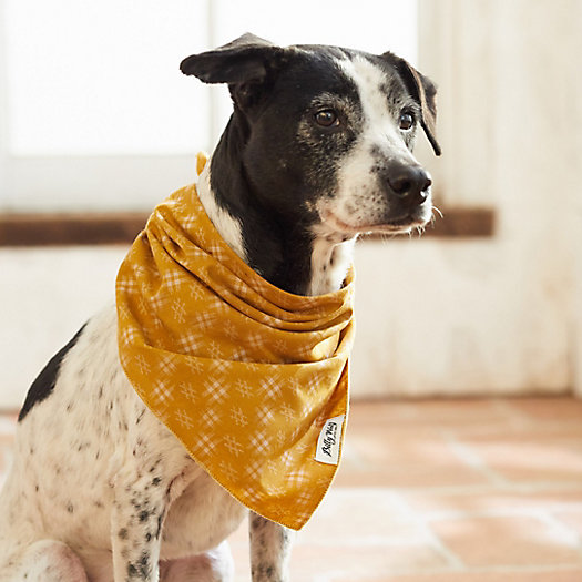 View larger image of Cotton Pet Bandana, Yellow Check
