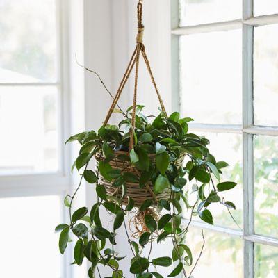 "Rattan Hanging Basket Pot, 10"""