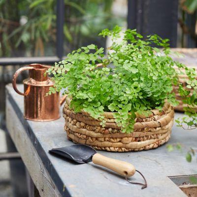 "Woven Basket Pot, Natural 12"""