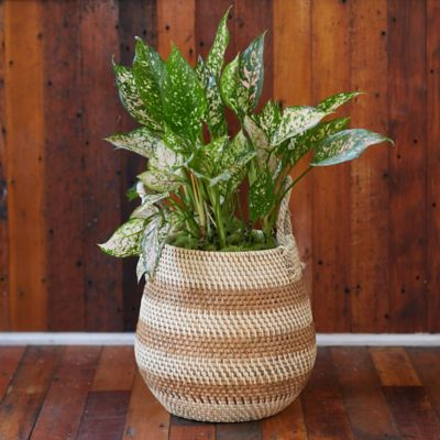"Stripe Rattan Basket Pot with Handles, 13"""