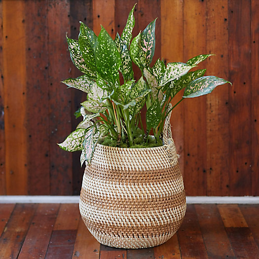 """View larger image of Stripe Rattan Basket Pot with Handles, 13"""""""