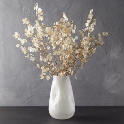 Dried Lunaria Pods Bunch