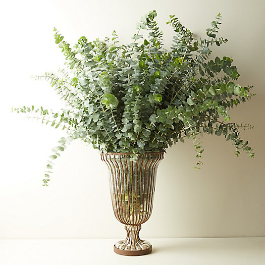 View larger image of Fresh Eucalyptus pulverulenta 'Baby Blue' Bunch