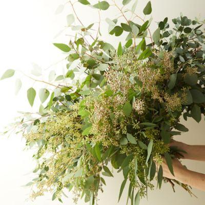 Fresh Assorted Eucalyptus Bunch