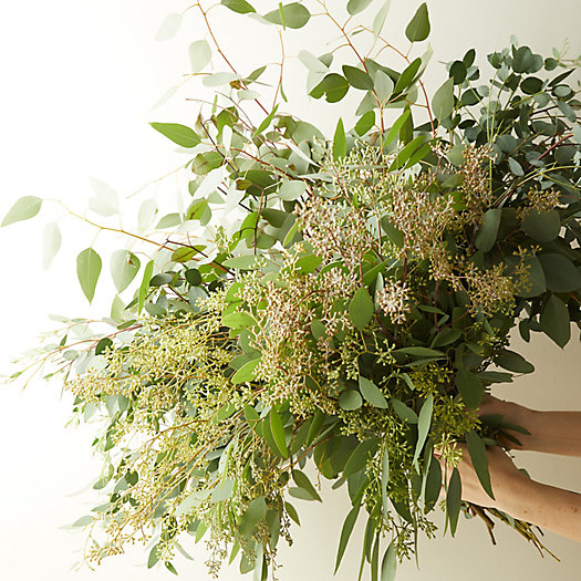 View larger image of Fresh Assorted Eucalyptus Bunch