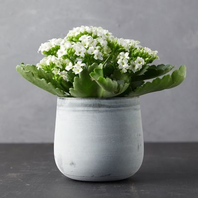 Kalanchoe Plant, Metal Pot