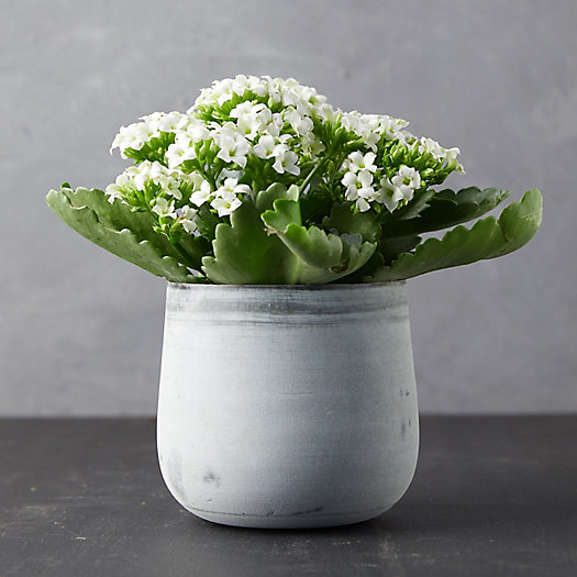 View larger image of Kalanchoe Plant, Metal Pot