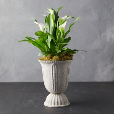 Calla Lily, Decorative Urn