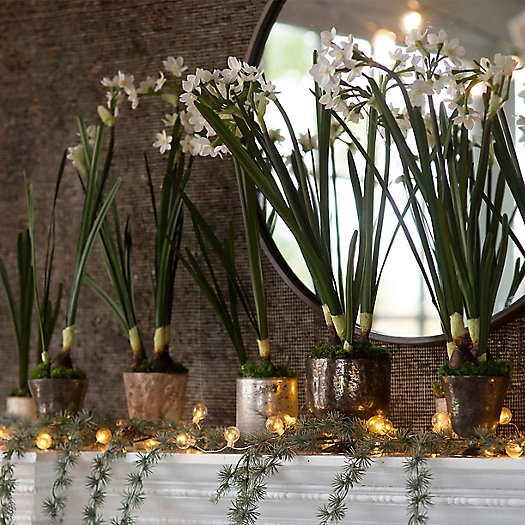 View larger image of Winter Bulb Planters