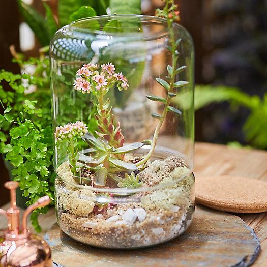 View larger image of DIY Terrarium Kit