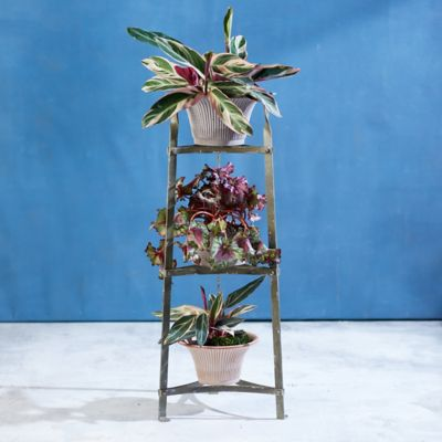 Three Tiered Iron Plant Stand