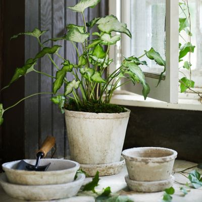 Earth Fired Clay Pot + Saucer, Set of 3