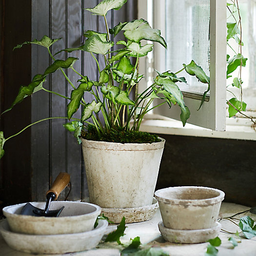 View larger image of Earth Fired Clay Pot + Saucer, Set of 3
