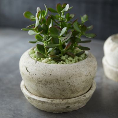 Earth Fired Clay White Curve Pots + Saucers, 2 Sizes Set