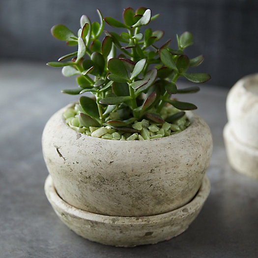 View larger image of Earth Fired Clay White Curve Pots + Saucers, 2 Sizes Set
