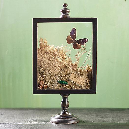View larger image of Natural Botanicals Curio Display Frame