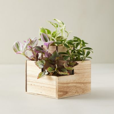 Tropical Plants with Wood Box, Set of 4