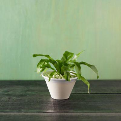 Farmhouse Ceramic Pot, Small