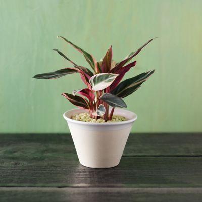 Farmhouse Ceramic Pot, Medium