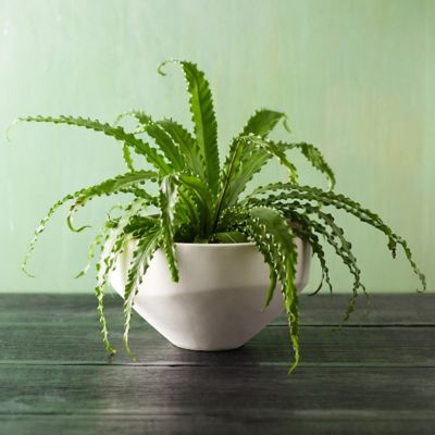 Free Form Ceramic Pot, 14""