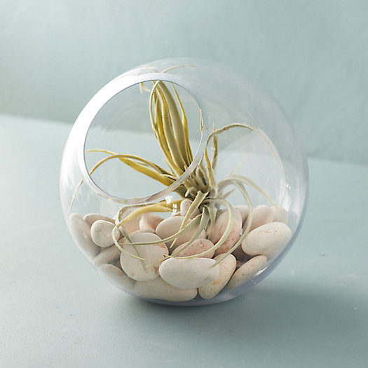 View larger image of Angled Fishbowl Terrarium
