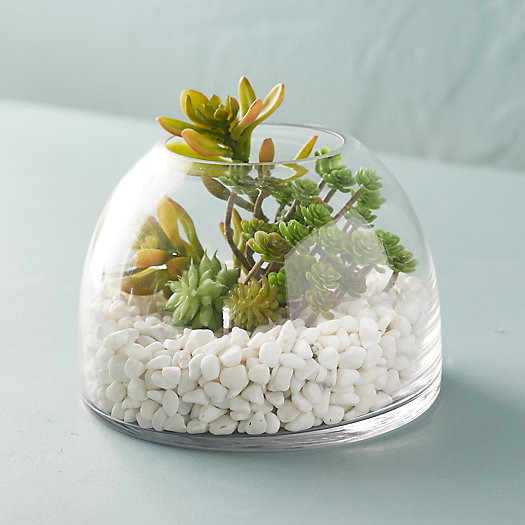 View larger image of Domed Terrarium